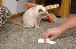 Отмываем диван и ковер от кошачьей мочи – эффективные способы