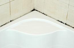 Грибок в ванной комнате – как от него избавиться?