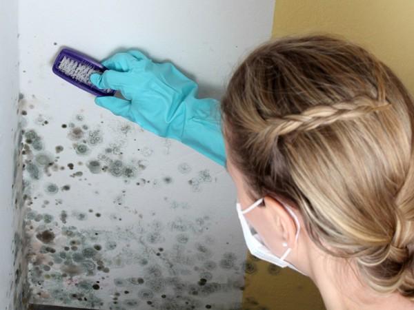 Устранение грибка с помощью щетки