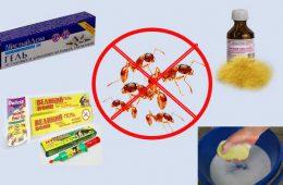 Порошки от муравьев изгонят насекомых из вашего дома!