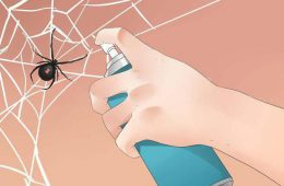 Как вывести пауков из частного дома?