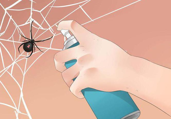 Почему в доме появляются большие пауки. Почему в доме много пауков