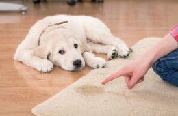 Как устранить запах собаки в квартире?